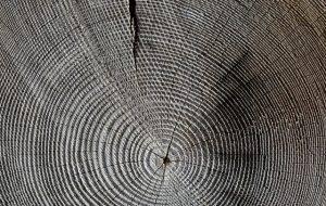 wood-618673_640