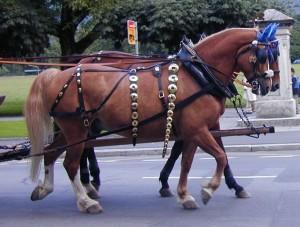 Quelle: Hanspeter Schären, horseman.ch